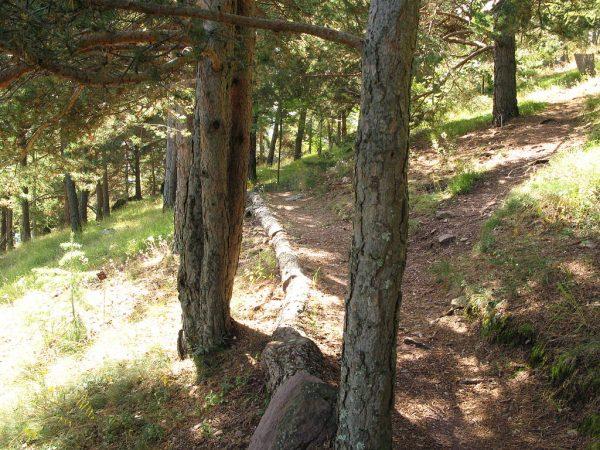 Visite Roure, Guide Roure, Arboretum Roure